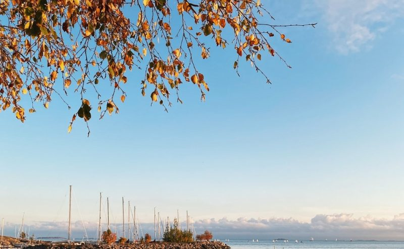 Havet, en klarblå himmel och höstlöv.