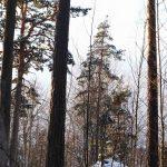Träd i en skog.